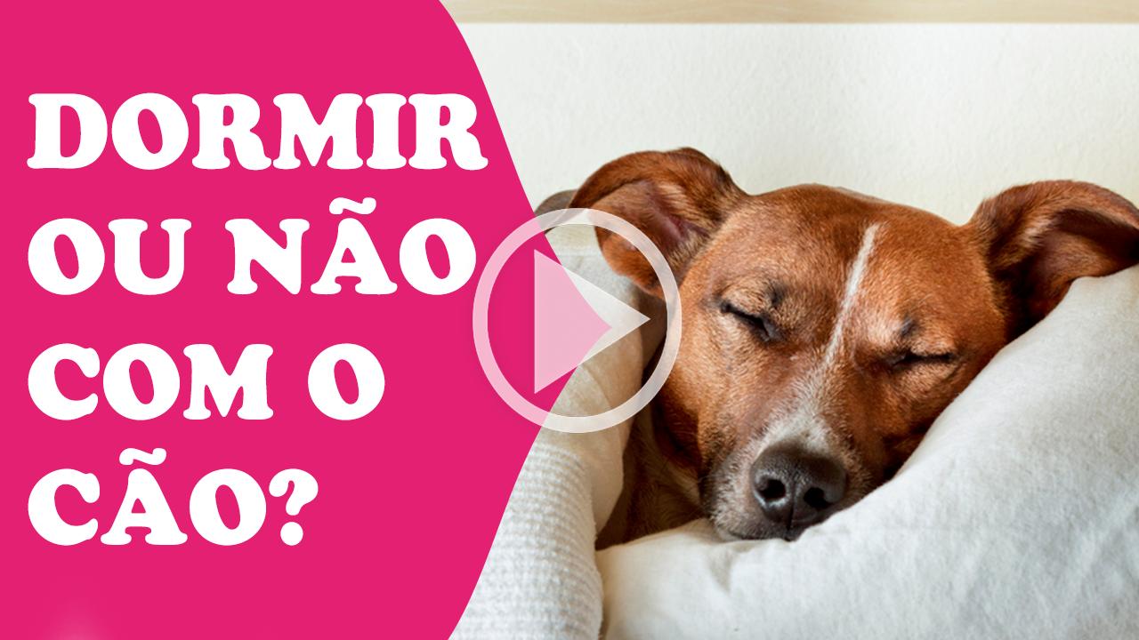 dormir ou não com o cachorro na cama